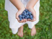 Blaubeeren sind echtes Superfood | © panthermedia.net / grinvalds