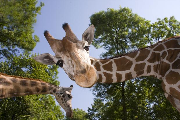 Die schönsten Zoo's Deutschlands | © panthermedia.net /belizar