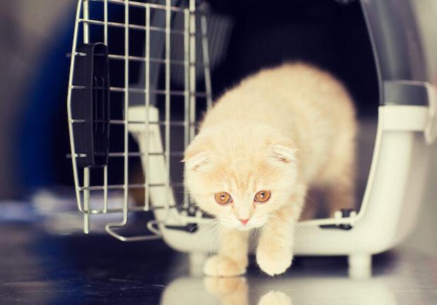 Katze als Haustier | © panthermedia.net / Lev Dolgachov
